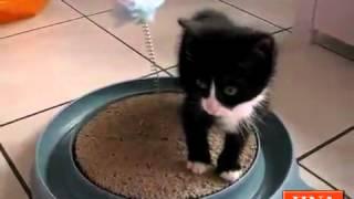 preview picture of video 'Aufnahmestopp bei der Tiernothilfe Zierenberg'