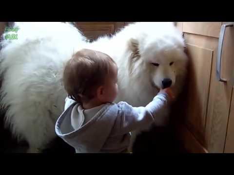 Clip hài hước nhất thế giới cười bể bụng về trẻ em và con vật cưng ♥‿♥