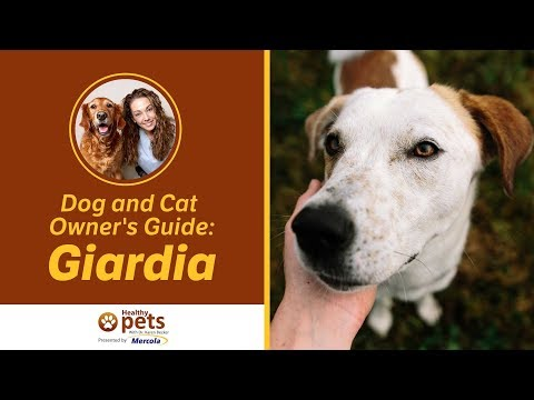 Giardia fenbendazole treatment