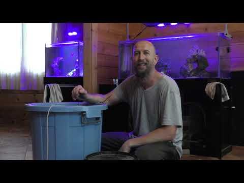 Maine Coon férgek kezelése