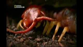 хищные опаные насекомые насекомые