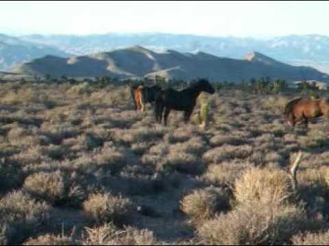 ^® Watch Full Fighting Mustang