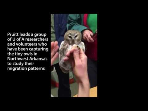 Research Frontiers Profile: Saw Whet Owls