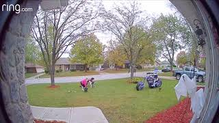 Dogs drag woman across lawn * best caught on Ring doorbell *