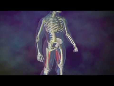 Le programme de lentraînement sur tous les groupes des muscles pour 3 jours