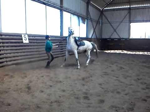Upadek z konia / Horse fail