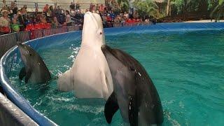 Slava Filatov! День дильфина