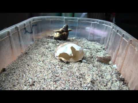 Parassiti in un acquario