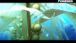 Nuestros Mares - Bosques de Kelp