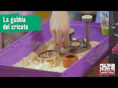 TUTORIAL: preparare la gabbia del criceto | Maxi Zoo