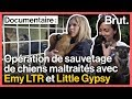 Emy LTR et Little Gypsy au secours de chiens maltraités avec 30 millions...