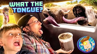 THEY TRIED TO KISS ME!! Scare Cam Drive Thru + Paqui One Chip Challenge (FV Family Vlog )