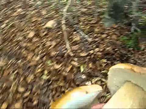 Trattamento da carbonato di sodio di un fungo di piede di gambe