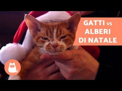 Gatto VS Albero di Natale – Evitare che il gatto DISTRUGGA l'albero di Natale!