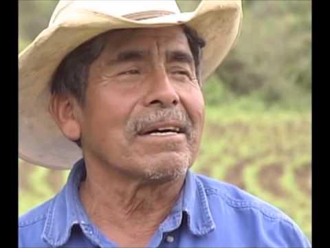 Maíces Criollos de Michoacán