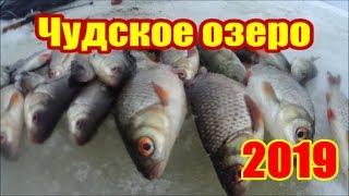 Как ловить в декабре на чудском озере