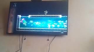 Играю в Реймана на PS4 сколько раз Бублик появлялся в видео? напиши в комментариях