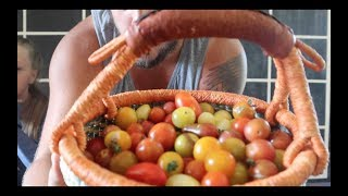 Dehydrated Cherry Tomatoes   Roots & Refuge Kitchen