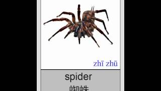 Mandarin Chinese Flashcards  - Animals - Insects and Bugs I 普通话闪卡- 昆虫