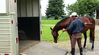 How to Load a Horse On a Trailer