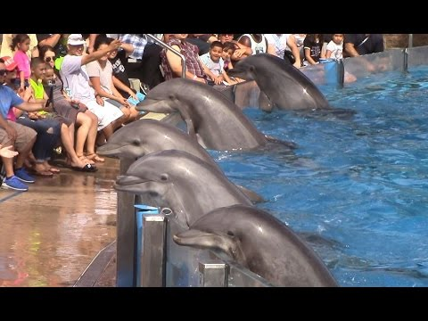 Kaarten met dolfijnen, This is SeaWorld San Diegos newer dolphin show..