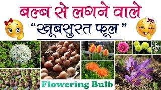 बल्ब से लगने वाले खूबसूरत फूल || Beautiful Flowering Bulbs