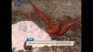 Пермскую пятиэтажку атаковали полчища красных слизней