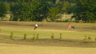 preview picture of video 'Everlinks Club de Golf: avance a enero del 2009'