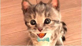 Ми ми ми! Маленький КОТЕНОК #2  Развлекательное видео для детей СИМУЛЯТОР котика Детский летсплей