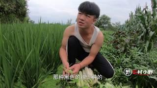 又到了收玉米的季节,小野摘了十几个,拿来蒸吃好不好?