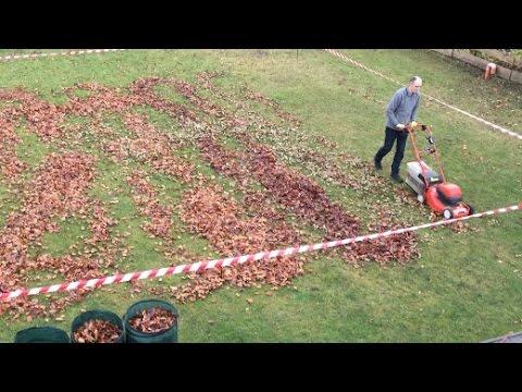 Harke, Rasenmäher, Laubsauger: Was hilft beim Kampf gegen das Laub am besten?
