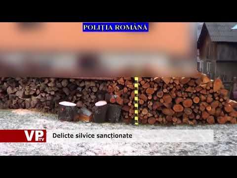 Delicte silvice sancționate