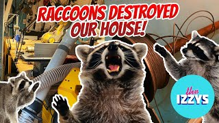 Five Raccoons Got TRAPPED in Our House
