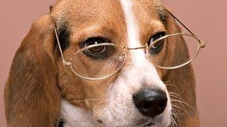 ТОП 10 самых умных собак в мире. Часть 2
