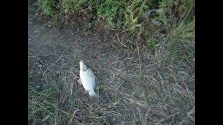 Рыбалка в скопина