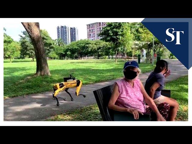Робот Spot теперь работает смотрителем впарке Сингапура