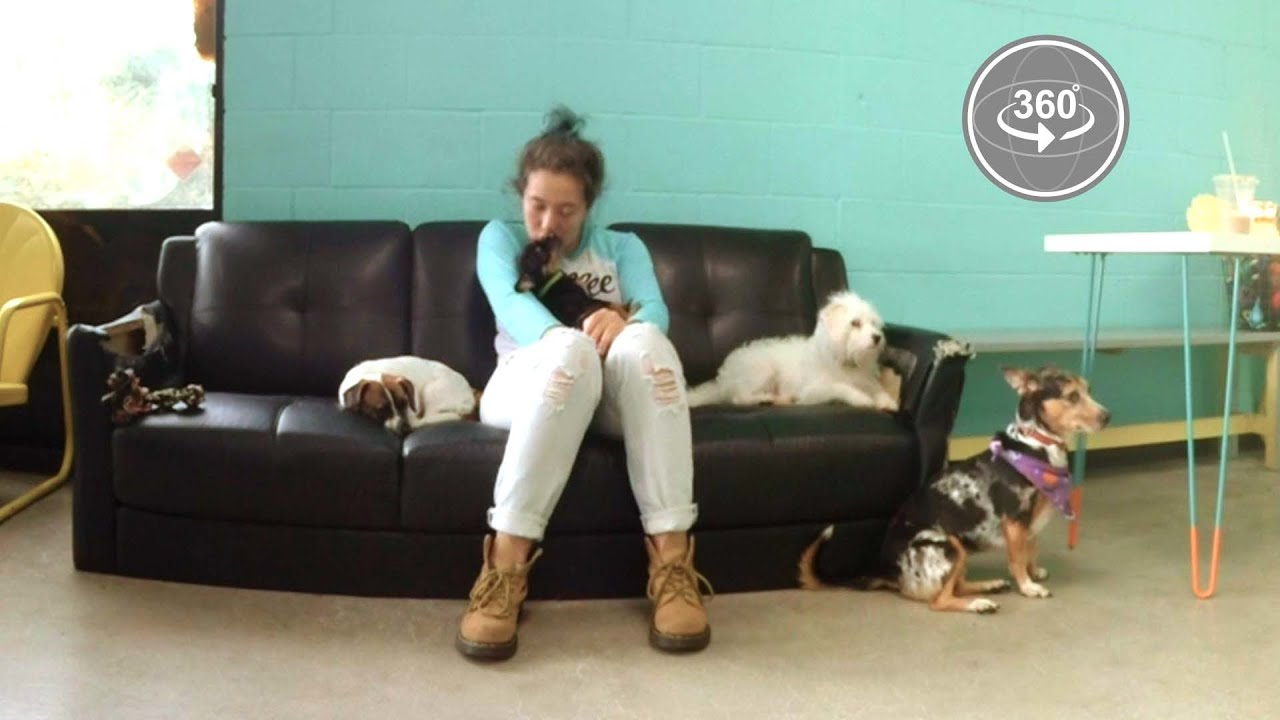 America's First Dog Cafe (360° Video) thumbnail