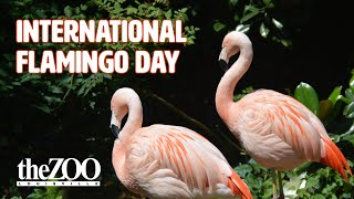 International Flamingo Day (2021)