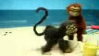 Maimuni ucha -)) -