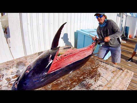 Surprise Bigeye Tuna! Catch Clean and Cook