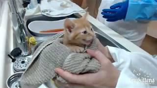 Ferocious feral kittens get their first bath!  TinyKittens.com