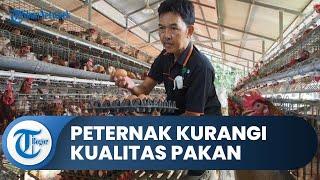 Harga Telur Ayam Anjlok, Peternak Ayam Telur di Bogor Kurangi Kualitas Pakan
