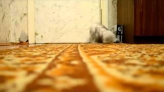 Как наша кошка двери открывала