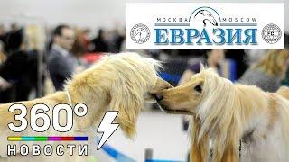 """В Москве открылась одна из крупнейших международных выставок собак """"Евразия""""."""