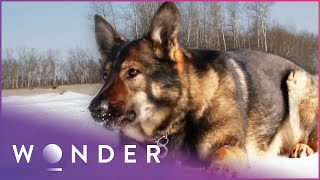 Officer Mourns Death Of His Police Dog | K9 Mounties S1 EP6