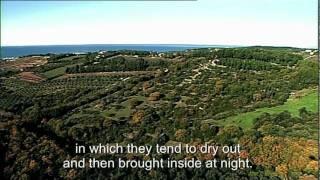 Cooking In Tuscany - Episode 1 - La Ribollita