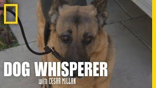 Learning the Leash | Dog Whisperer