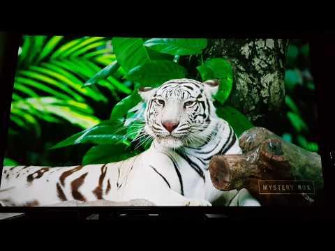 JVC X7900 4K HDR Projector after self calibration demo