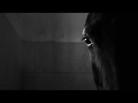 Horse video short film