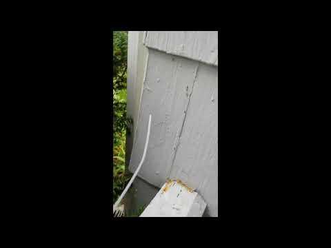 Shrubs & Bushes Make it Easy for Ants to Infest Home in Neptune, NJ